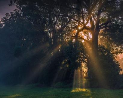 Morning-Rays-Narooma-NSW001-20x25