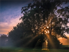 Morning-Rays-Narooma-NSW003-20x26