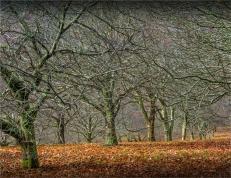 Mount-Macedon-Chestnut-Orchard-VIC-004-20x25