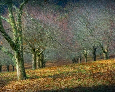 Mount-Macedon-Chestnut-Orchard-VIC-017-20x25