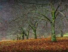 Mount-Macedon-Chestnut-Orchard-VIC-025-20x26