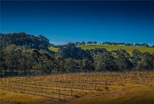 Tilba-Winery