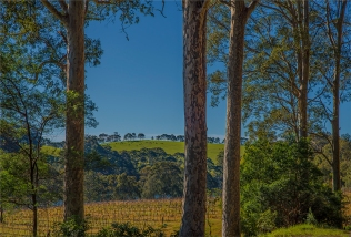 Tilba-Winery099