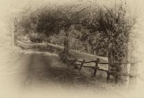 beefsteak-road-2016ni-007m-17x25