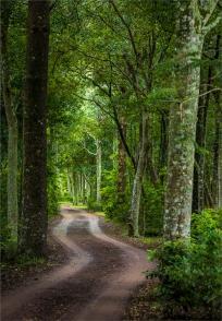 bullocks-hut-road-2016ni-035-18x26