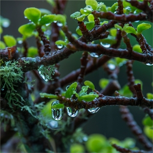 water-droplets-2016ni-007-20x20