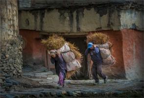 muktinath-2016npl-642-17x25