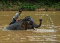 elephant-camp-laos-0277-18x25
