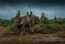 elephant-camp-laos-0574-17x25