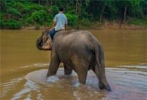 elephant-sanctuary-laos-2016-054-17x25