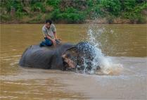 elephant-sanctuary-laos-2016-067-17x25