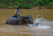 elephant-sanctuary-laos-2016-071-17x25