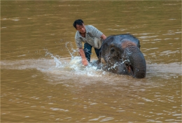 elephant-sanctuary-laos-2016-072-17x25