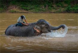 elephant-sanctuary-laos-2016-085-17x25