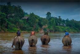 elephant-sanctuary-laos-2016-095-17x25
