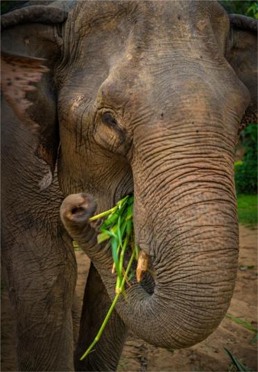 elephant-sanctuary-laos-2016-117-18x26