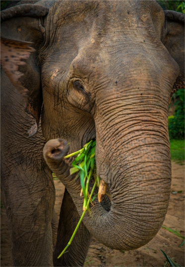 elephant-sanctuary-laos-2016-117-18x26