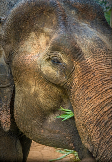 elephant-sanctuary-laos-2016-120-18x26