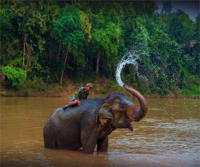 elephant-sanctuary-laos-2016-5-elephant
