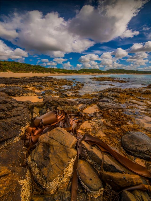colliers-beach-king-island-tas-2016-072-24x32