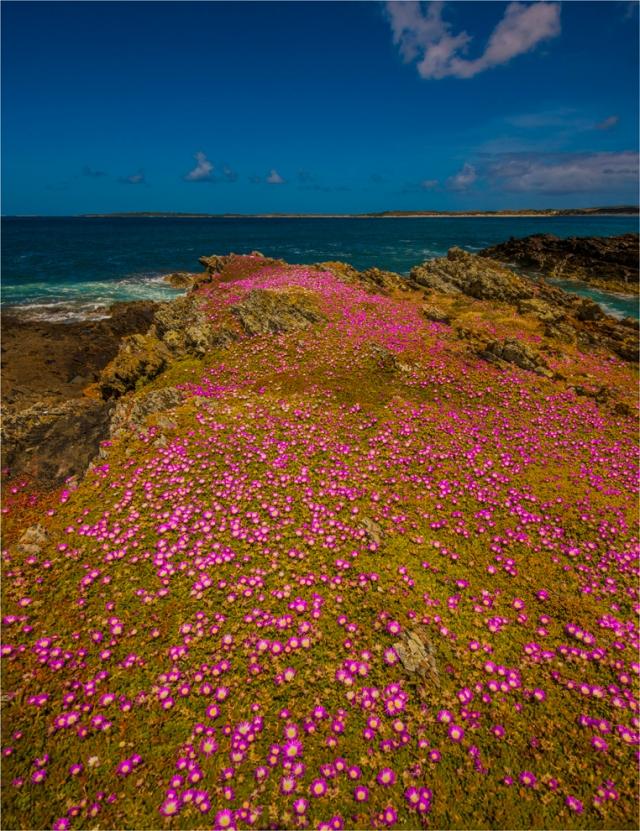 seal-bay-king-island-tas-2016-088-20x26