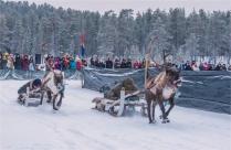 jokkmokk-reindeer-racing-2017-swe418-17x26
