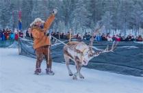 jokkmokk-reindeer-racing-2017-swe431-17x26