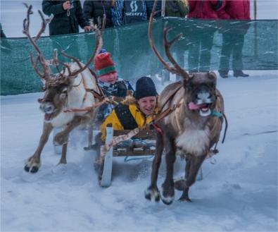 reindeer-racing-jokkmokk-2017-swe004-15x18