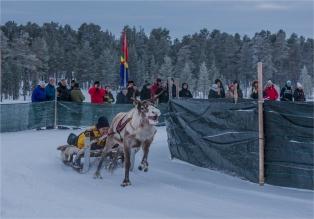 reindeer-racing-jokkmokk-2017-swe058-14x20