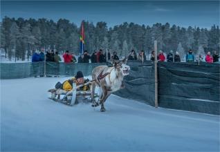 reindeer-racing-jokkmokk-2017-swe059-18x26