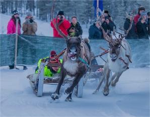 reindeer-racing-jokkmokk-2017-swe072-14x18