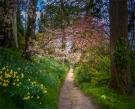 Mintern-Gardens-2017-ENG0261