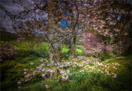 Mintern-Gardens-2017-ENG048-18x26