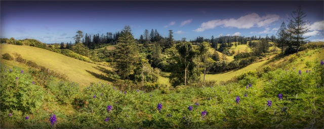 Douglas-Drive-Valley-2017-Norfolk-Island-012-18x45