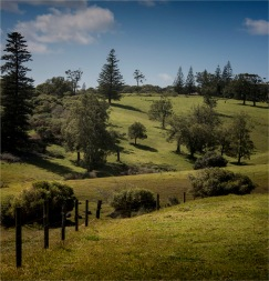 Headland-Reserve-Area-2017-Norfolk-Island-042