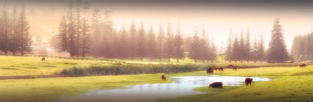 Kingston-Morning-Light-2017-Norfolk-Island-7830