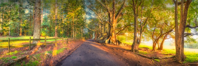 New-Farm-Road-Dawn-2017-Norfolk-Island-807-20x60