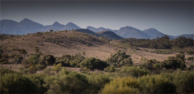 Wilpena-South-2017-SA-019-22x45 copy