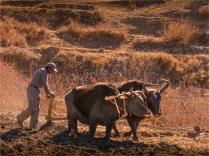 Jharkot-2018-NEPAL-0153