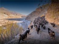 Kagbeni-Goat-Herder-2018-NEPAL-0350