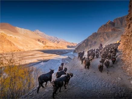 Kagbeni-Goat-Herder-2018-NEPAL-0353