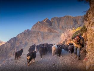 Kagbeni-Goat-Herder-2018-NEPAL-0364