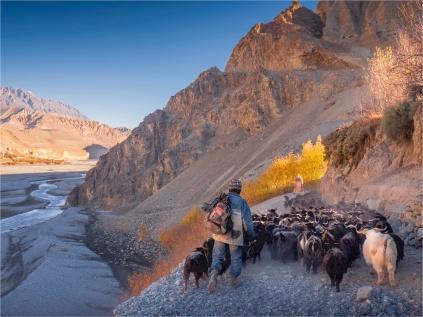 Kagbeni-Goat-Herder-2018-NEPAL-0368