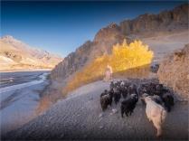 Kagbeni-Goat-Herder-2018-NEPAL-0372