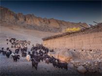 Kagbeni-Goat-Herder-2018-NEPAL-0375