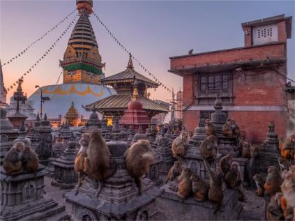 Kathmandu-Monkeys-Swayambunath-17112018-NEPAL-0001