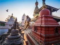 Kathmandu-Monkeys-Swayambunath-17112018-NEPAL-0213
