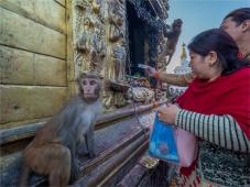 Kathmandu-Swayambunath-17112018-NEPAL-0082