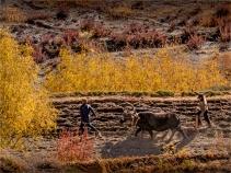 Tiri-Upper-Mustang-2018-NEPAL-0029