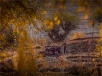 Tiri-Upper-Mustang-2018-NEPAL-0080